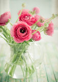 Fresh ranunculus. Bouquet of pink ranunculus in vase Royalty Free Stock Photo