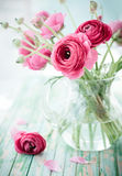Fresh ranunculus. Bouquet of pink ranunculus in a vase Stock Photography