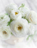 Fresh ranunculus. Bouquet of fresh white ranunculus Royalty Free Stock Photos