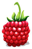 Fresh rasberry with green stem Royalty Free Stock Images