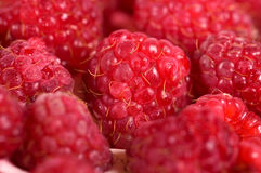 Fresh raspberrie Stock Images