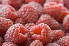 Fresh raspberries. In macro shot Royalty Free Stock Images
