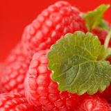 Fresh raspberries. On the plate Stock Photography