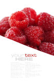 Fresh raspberries. Over white (easy removable text Royalty Free Stock Image