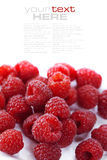 Fresh raspberries. Over white (easy removable text Stock Photo