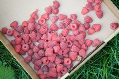 Fresh Raspberries Royalty Free Stock Photos