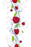 Fresh raspberries. Falling in water splash, isolated on white background,vertical Royalty Free Stock Images