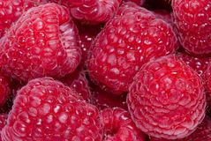Fresh raspberries Stock Image