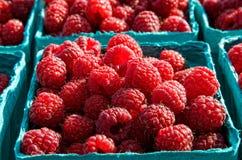 Fresh raspberries. Box of fresh red raspberries at local farmer's market Stock Image
