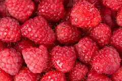 Fresh raspberries background Stock Images