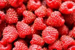 Fresh raspberries background close up. Fresh red raspberries background closeup Royalty Free Stock Image