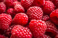 Fresh raspberries background. Close up photo Royalty Free Stock Photography