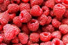 Fresh raspberries background closeup. Fresh raspberries on background close-up Stock Photography