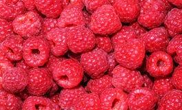 Fresh raspberries background closeup photo Stock Image