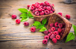 Fresh raspberries. In the basket Royalty Free Stock Photography