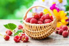 Fresh raspberries in basket and flower bouquet. On on background outdoors Royalty Free Stock Image