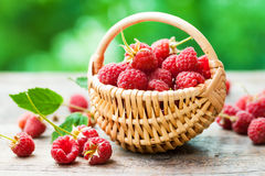 Fresh raspberries in basket on table. Outdoors Royalty Free Stock Photo