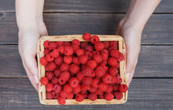 Fresh raspberries basket in woman's hands on wood background. Wicker basket with fresh raspberries in woman's hands on brown rustic wood background. Harvest of Stock Photos