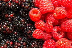 Fresh raspberries and blackberries. Close up of fresh raspberries and blackberries forming background Royalty Free Stock Images