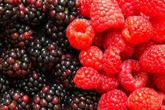 Fresh raspberries and blackberries Royalty Free Stock Images