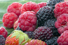 Fresh raspberries blackberries and strawberries. On a grape leaf Stock Photos