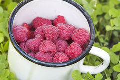Fresh raspberries in a bowl close-up on the grass Stock Images