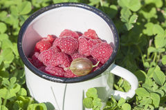 Fresh raspberries in a bowl close-up on the grass. Selective focus Royalty Free Stock Photography