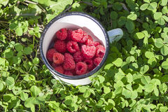 Fresh raspberries in a bowl close-up on the grass. Selective focus Royalty Free Stock Photo