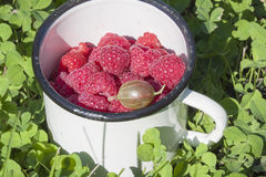 Fresh raspberries in a bowl close-up on the grass. Selective focus Stock Photos
