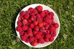 Fresh Raspberries Royalty Free Stock Images