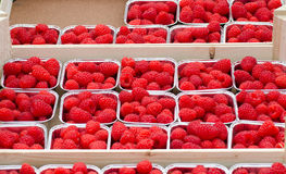 Fresh raspberries in boxes for sale. At farmers market Stock Photos