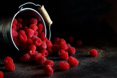 Fresh raspberries in a bucket. Fresh raspberries in a small metal bucket on a dark background Royalty Free Stock Photos