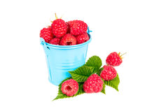 Fresh raspberries in a bucket. Isolated on white background Stock Photos