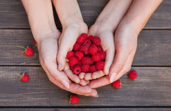 Fresh raspberries in child and mother hands on wood background. Handful of fresh raspberries in child and mother hands on brown rustic wood background. Harvest Stock Photo