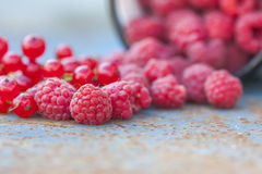 Fresh raspberries close-up on  dark background. Selective focus Stock Image