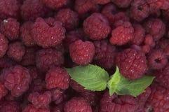 Fresh raspberries, closeup. Lots of fresh ripe raspberries, closeup Stock Image