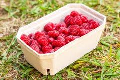 Fresh raspberries. Closeup macro photo Stock Photography