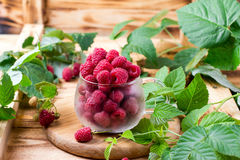 Fresh raspberries in a cup Stock Photos