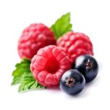 Fresh raspberries and currants. Fresh raspberries and currants on the white backgrounds Stock Photos