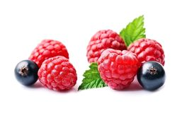Fresh raspberries and currants. Fresh raspberries and currants on the white backgrounds Royalty Free Stock Image