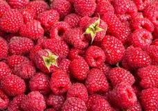 Fresh raspberries. Delicious first class fresh raspberries background Stock Photos