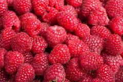 Fresh raspberries. Delicious first class fresh raspberries background Stock Photo