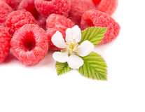 Fresh Raspberries with a flower and a leaf Royalty Free Stock Images