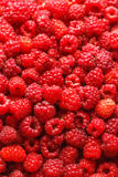 Fresh raspberries. Food-background. selective focus. Fresh raspberries. Food-background. Top view. Selective focus Stock Image