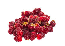 Fresh Raspberries isolated. On white background Royalty Free Stock Photography