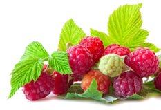 Fresh raspberries . Royalty Free Stock Image
