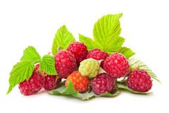Fresh raspberries . Royalty Free Stock Photography
