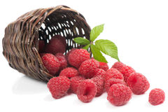 Fresh raspberries with leaf  in a basket is scattered Stock Photography