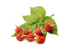 Fresh raspberries with leaves stock photos