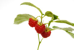 Fresh raspberries with leaves Stock Photo